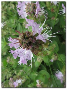 Guided Walk – Wed 13 January Springside Nature Reserve
