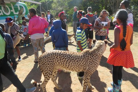 kids & cheetah