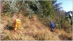 Clearing Invasives