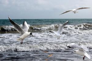 Pelagic Birding off Durban